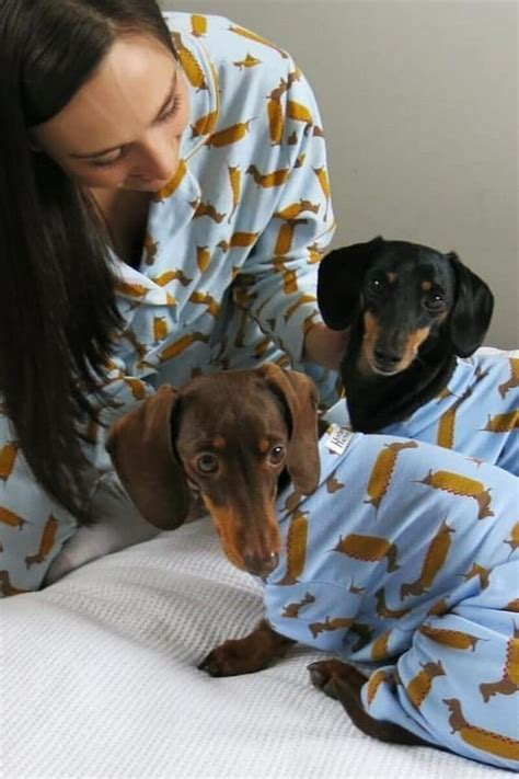 Sausage Dog Central   Power Pets - Animals with Influence