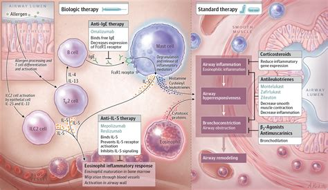 Diagnosis and Management of Asthma in Adults: A Review