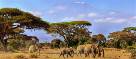 Exclusive Travel Tips for Your Destination Amboseli in Kenya