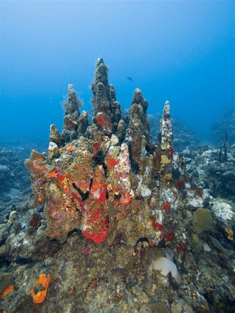 Number of Threatened Coral Species Jumps From 2 to 22