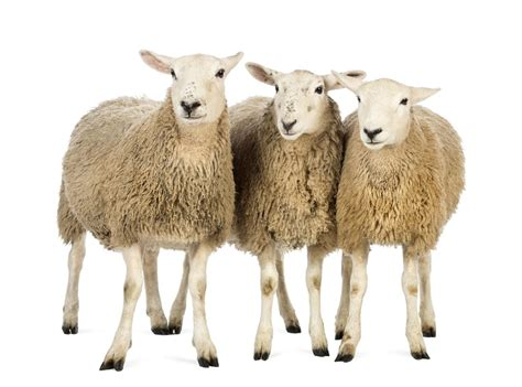 If science can clone a sheep, why not a hedge fund