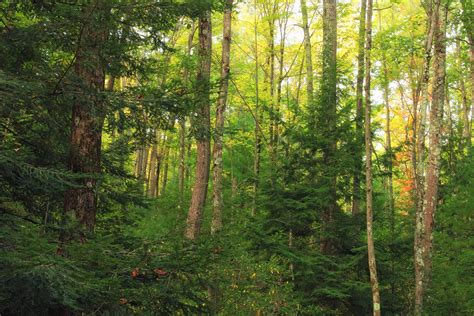 Free picture: wood, landscape, tree, nature, leaf, birch